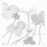 Hepatica - Nina Kilpatrick